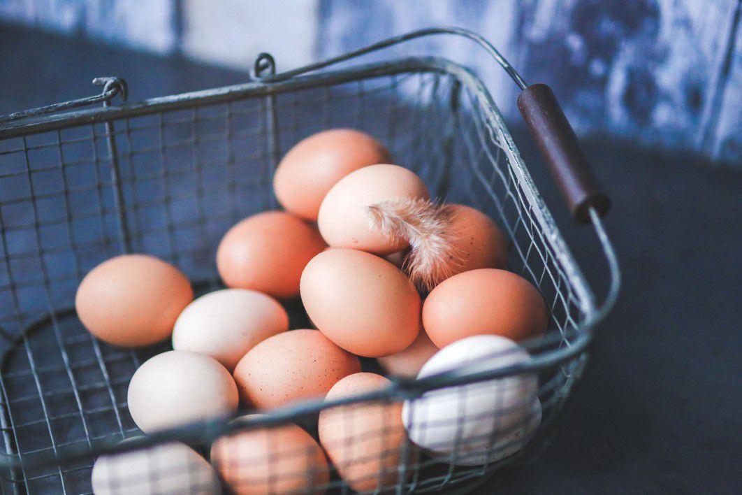 Quels œufs choisir ?