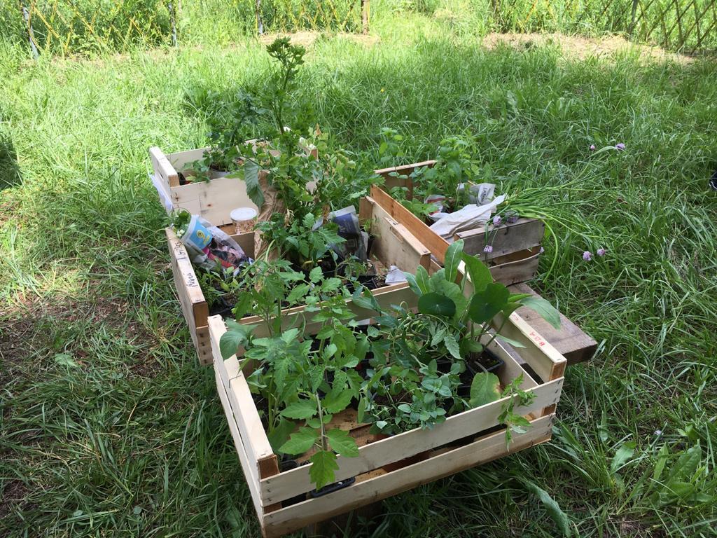 Troc et commande groupée de plants