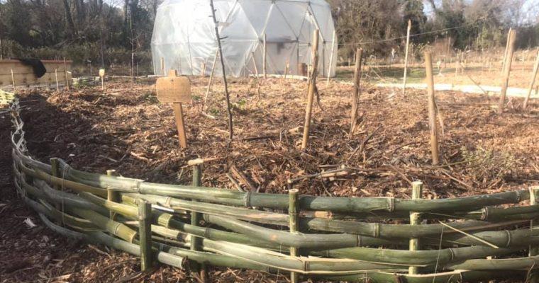 Des bordures tressées pour embellir le jardin-forêt